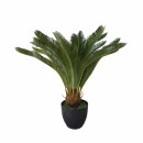 Cycas potted 65cm height, green
